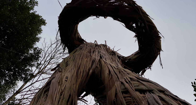 tronki fin web-1